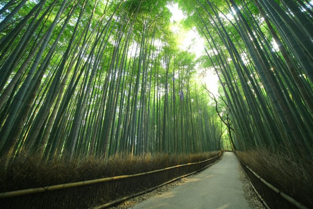 嵯峨野の竹林:京都府