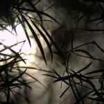 【閲覧注意】絶対に行ってはいけない愛知県の心霊スポットまとめ12選